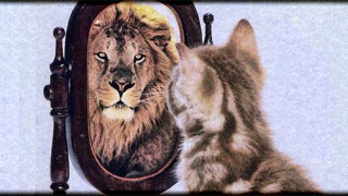 Self-improvement1 - kitten and lion