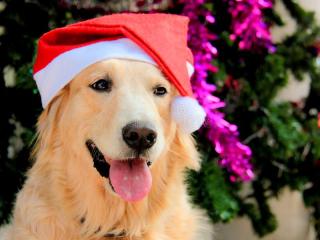 Golden-retriever-dog-wearing-christmas-hat-smile-happily-christmas-tree-golden-retriever-dog-wearing-christmas-hat-159445687